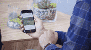 Instant Articles The Verge